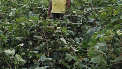 Photo of वादळी वाऱ्यामुळे नुकसान झालेल्या शेतकऱ्यांना आर्थिक मदत करा आ. रत्नाकर गुट्टे